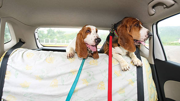 Tips for dog owners planning a road trip with their pet
