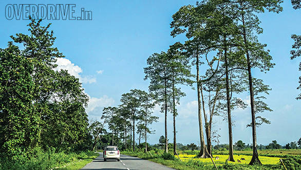 Clear skies in Kaziranga - the scenery along the way was ever-changing
