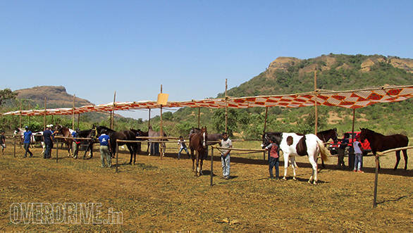 23--Horses-waiting-to-be-examined-by-the-Vet-B.-Ramanathan-and-his-team