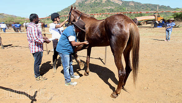 34--Vet-B.Ramanathan-checking-the-heart-beat-rate-of-Goldie