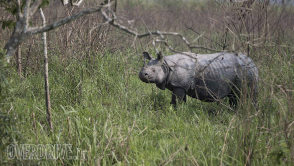 Two thirds of the population of the one- horned Rhinos are found in Kaziranga