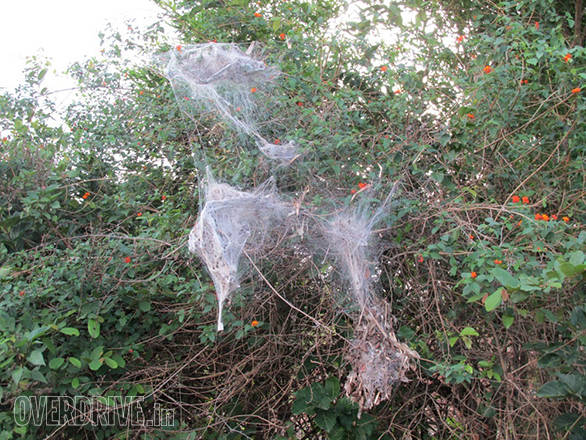 We saw many spider dens on this journey