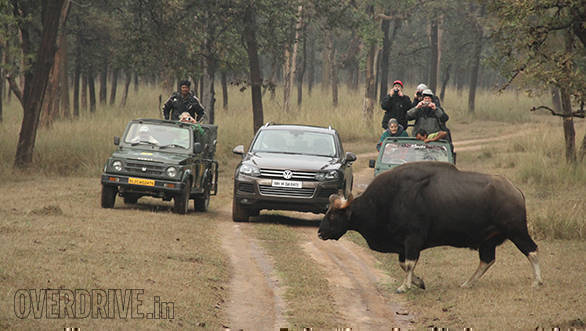 Driving on a 'Wildlife Safari'