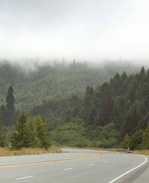 Northern California Scenic on Route 101 near Orick, California