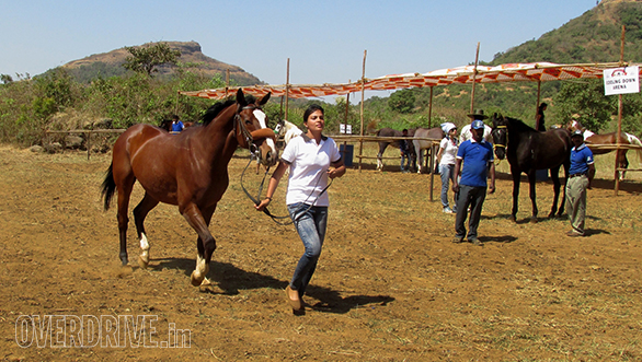 22--Riding-Coach-Laxmi-Singh-took-part-in-the-40-kms-and-here-she-is-warming-up-her-horse.
