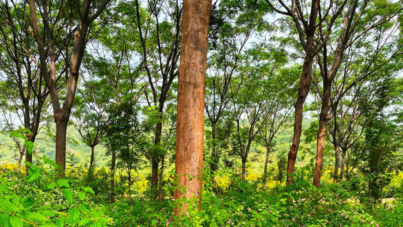 Indian motorsport veteran plants 36,000 trees and creates a private wildlife sanctuary