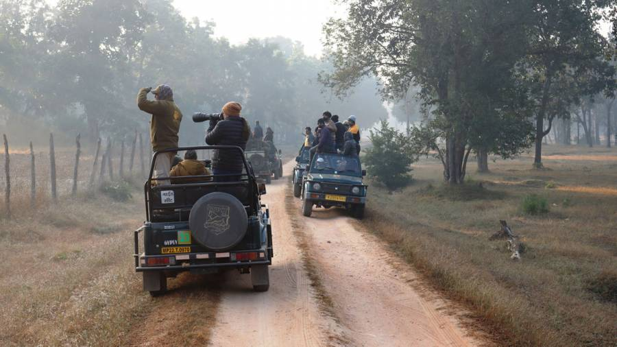 Wildlife Safaris – do the drivers need better training?