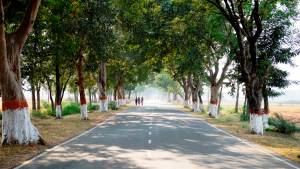 Indian Highways - And the disappearance of trees and milestones